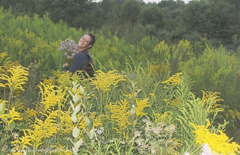 An Ode to the Bee Balms & Golden Rods of Late Summer